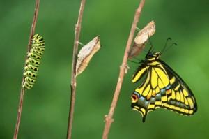 da-bruco-a-farfalla