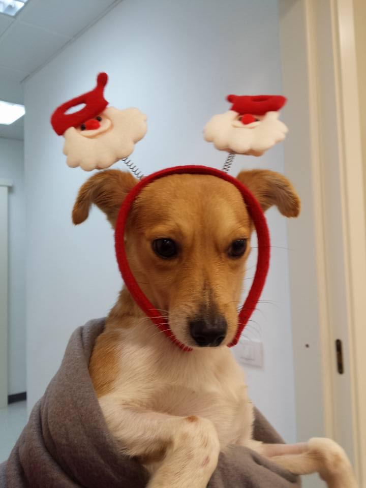Natale arriva per tutti