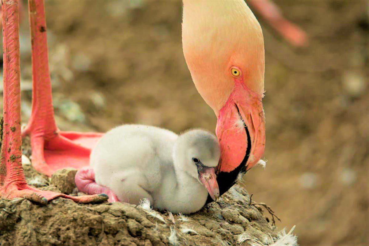 Fenicotteri rosa in Sardegna, una magia tutta da scoprire
