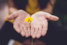 mani con fiore