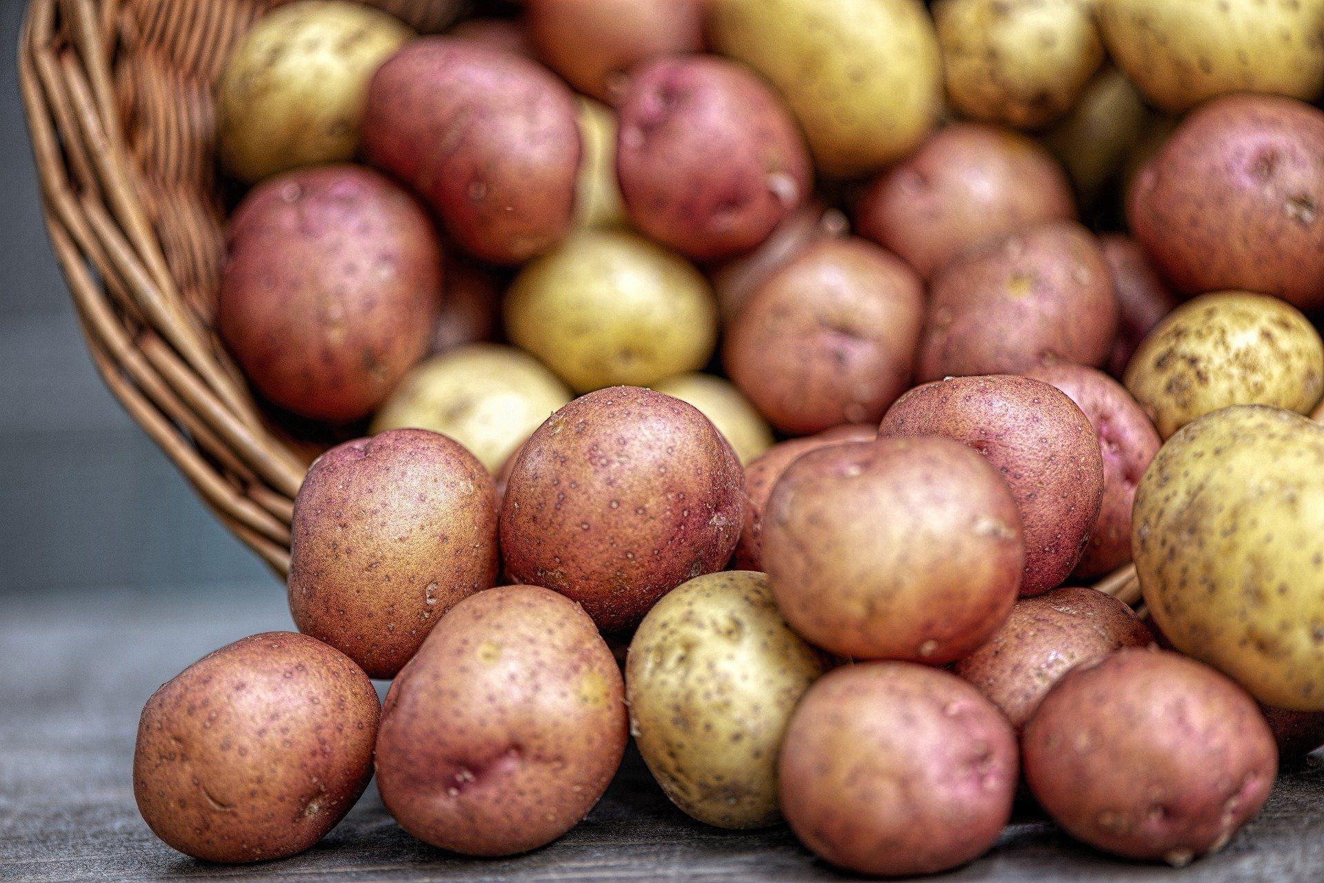 Patata di Sardegna: gialla, rossa e viola. Storia di un alimento che faticò ad imporsi